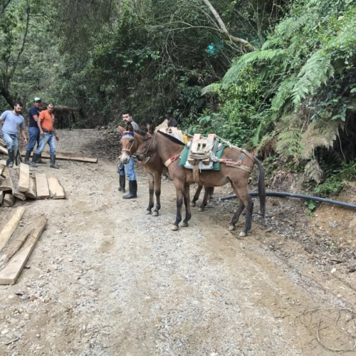 You'd have to be a Donkey to Construct it any other way - Colombia